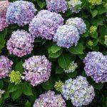 Flowering Perennials